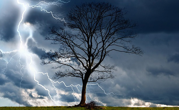 Tree struck by lightning during severe weather